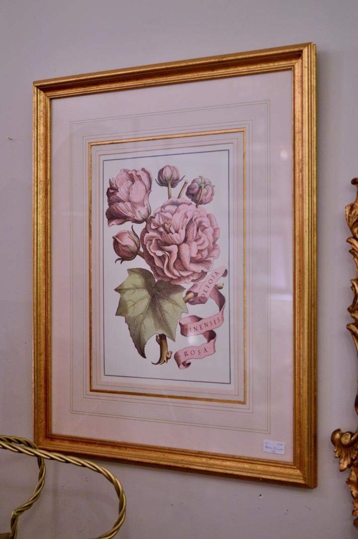 Rosa print
