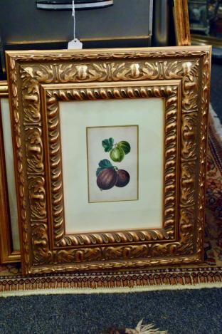Framed botanical of fruit - gooseberry