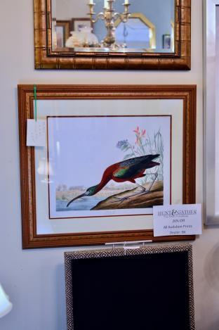 Audubon glossy ibis print