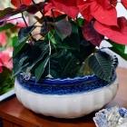 White / blue rim planter